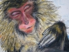 Makake beim Baden II - Kreide auf Papier